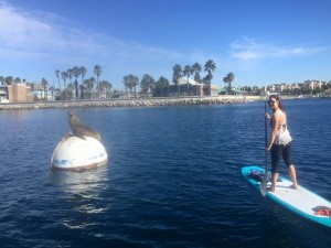 Liquid Shredder SUP Seal Watching