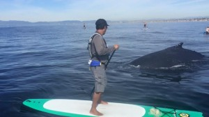 Whale Watching SUP